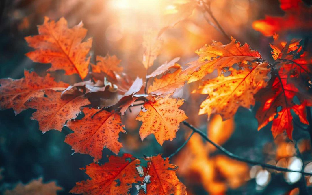 Fall Leaf Pick Up Guidelines